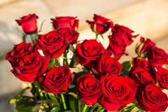 Bouquet of blossoming dark red roses Stock Image