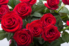 Bouquet of blossoming dark red roses Stock Photography