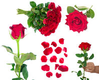 Bouquet of blossoming dark red roses in vase stock photography