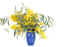 Bouquet of blossoming mimosa Royalty Free Stock Photos