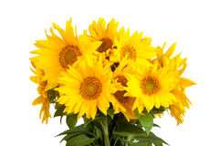 Bouquet of blossoming sunflowers Stock Photo