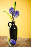 Bouquet with hyacinths Royalty Free Stock Image