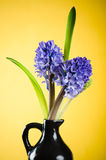 Bouquet with hyacinths Royalty Free Stock Photos