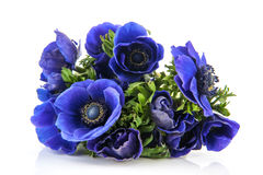 Bouquet blue Anemones Stock Photo