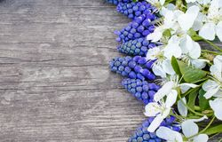 A bouquet of blue bells on old, wooden boards, with white flowers of cherry, bluebells. View from above royalty free stock photos