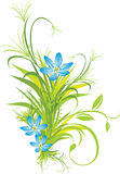 Bouquet of blue flowers with grass Royalty Free Stock Images