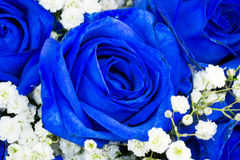 Bouquet of blue flowers- roses Royalty Free Stock Photography