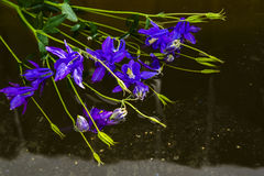 Bouquet of blue flowers in troubled water Stock Photo