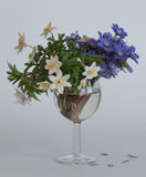 A bouquet of blue hepatica and white anemone in a glass goblet. The first spring flowers. A bouquet of blue hepatica and white anemone in a glass goblet Stock Image