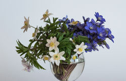 A bouquet of blue hepatica and white anemone in a glass goblet. The first spring flowers. A bouquet of blue hepatica and white anemone in a glass goblet Stock Photography
