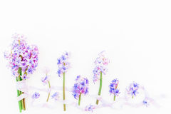 Bouquet of blue hyacinth flowers and shabby tapes on white background. Flat lay, top view. Holidays background Royalty Free Stock Photography