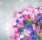 Bouquet of blue hyacinth and tulips Stock Image