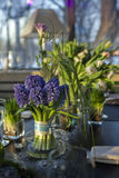 Bouquet of blue hyacinth in vase of Stock Images