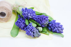 Bouquet blue hyacinth on white Royalty Free Stock Images