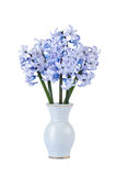 Bouquet of blue hyacinths Royalty Free Stock Image