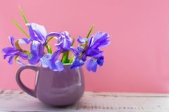 A bouquet of blue iris flowers in a lilac cup on a gentle pink background. royalty free stock photos