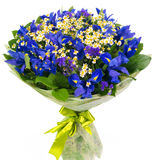 Bouquet of blue irises and daisies Stock Photo