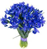 Bouquet of blue irises Stock Image