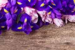 Blue irises and pik tulips stock photo