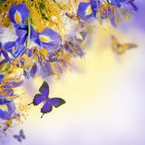 Bouquet of blue irises, white flowers
