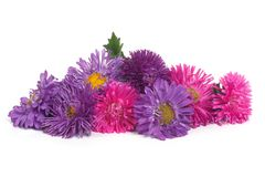Bouquet of blue and pink aster isolated on white Royalty Free Stock Images