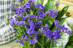 Bouquet of blue small florets Stock Image