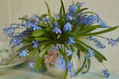 Bouquet of blue snowdrops in vase royalty free stock images