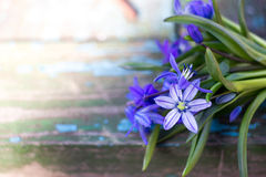 Bouquet of blue snowdrops on a wooden background. On which the sun is shining stock photo