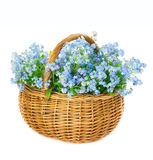 Bouquet of blue spring flowers in basket on white background Royalty Free Stock Photos