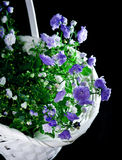 Bouquet of blue spring flowers in white basket Stock Photography