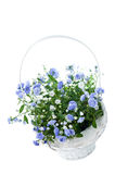 Bouquet of blue spring flowers in white basket Stock Photos