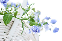 Bouquet of blue spring flowers in white basket Royalty Free Stock Image