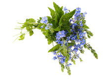 Bouquet of blue wild flowers. Royalty Free Stock Image