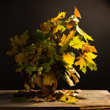 Bouquet of bright autumn leaves Stock Photography