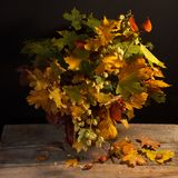 Bouquet of bright autumn leaves Stock Images
