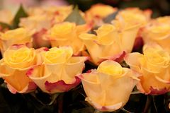 Bouquet of yellow roses for a wonderful gift. Bouquet of bright and beautiful yellow-orange roses for a wonderful gift Stock Images