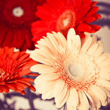 Bouquet of bright colorful gerbera flowers Royalty Free Stock Image