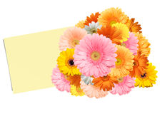 Bouquet of bright colorful gerberas and sheet of paper. On a white background stock images