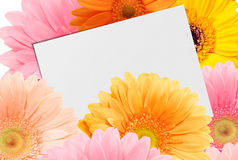 Bouquet of bright colorful gerberas and sheet of paper. On a white background, close-up royalty free stock photo