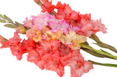 Bouquet bright gladiolus Stock Images