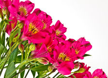 Bouquet of Bright Pink Alstroemeria Stock Photos