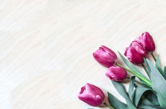 Bouquet of bright pink tulips lay at an angle Stock Photo