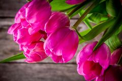 Bouquet of bright purple tulips closeup on a wooden background Royalty Free Stock Image