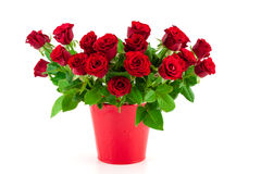 Bouquet of bright red roses in a red bucket Royalty Free Stock Photography