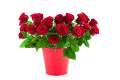Bouquet of bright red roses in a red bucket Stock Images