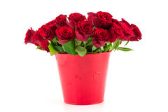 Bouquet of bright red roses in a red bucket Royalty Free Stock Images
