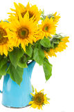 Bouquet of bright sunflowers Royalty Free Stock Photo