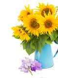 Bouquet of bright sunflowers and gladioluses. In blue vase isolated on whute Royalty Free Stock Image