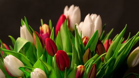 Bouquet of bright tulips blooms Royalty Free Stock Photography