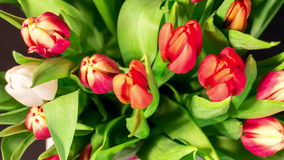 Bouquet of bright tulips blooms. Top view, timelapse 4K stock video